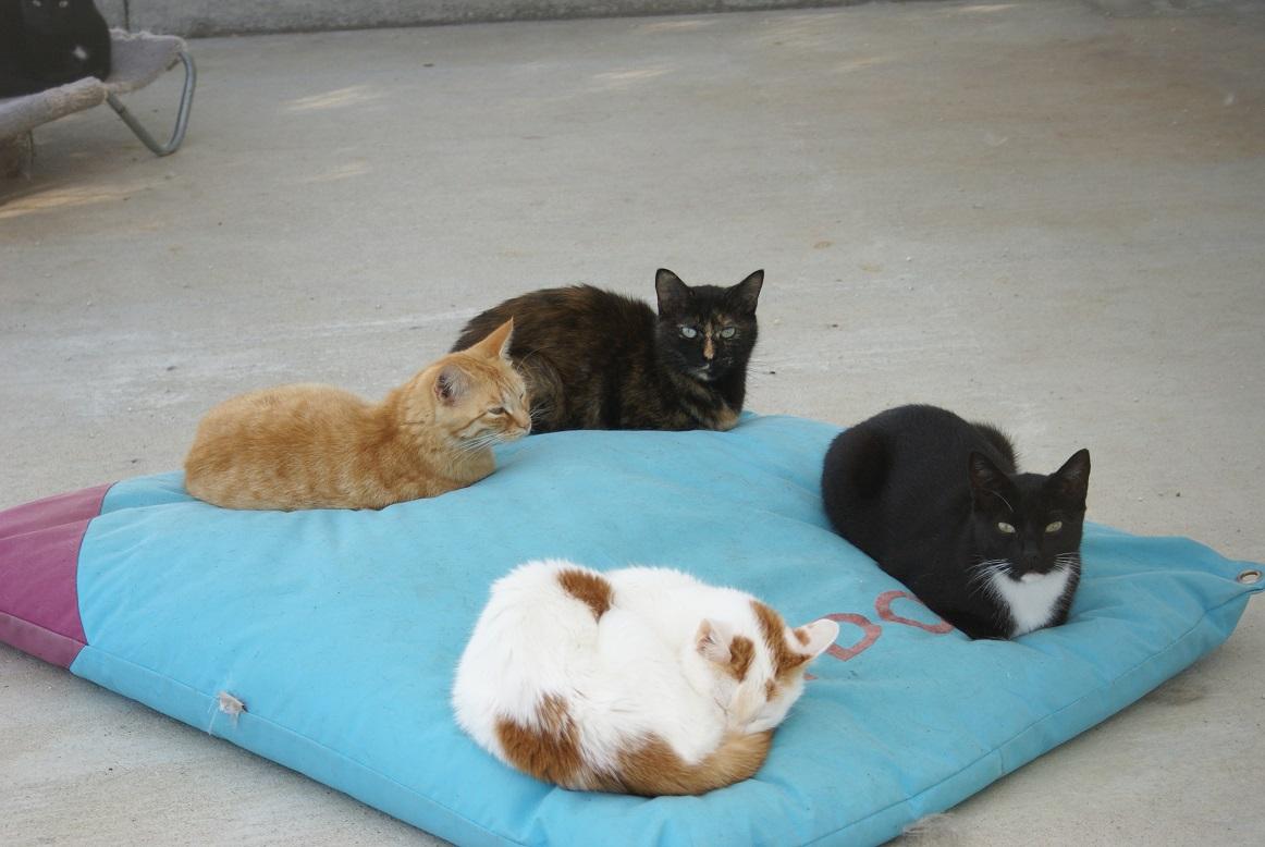 cousin douillet pour chats soci t protectrice des. Black Bedroom Furniture Sets. Home Design Ideas