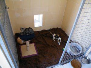 Espace détente intérieur pour chats