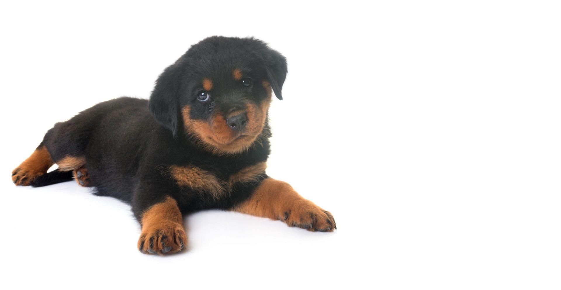 Adoption chiens et chats