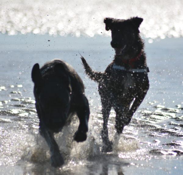 Témoignage adoption chien Nefix
