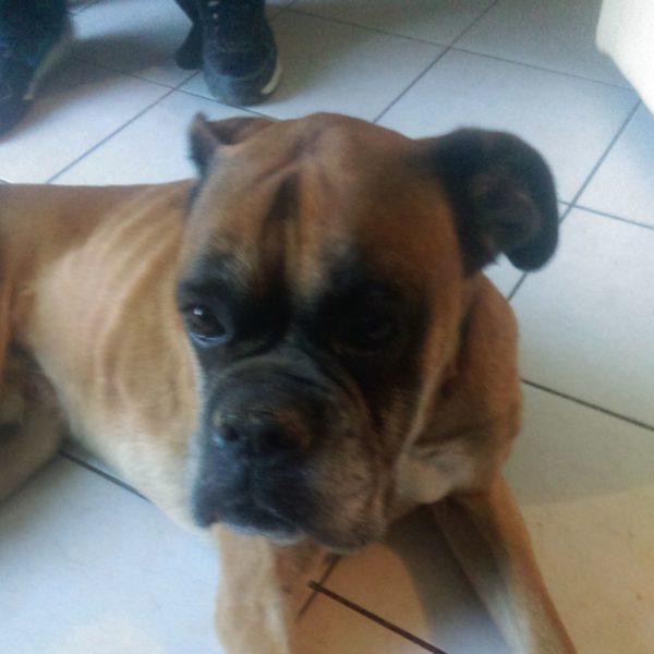 Témoignage adoption chien Radja